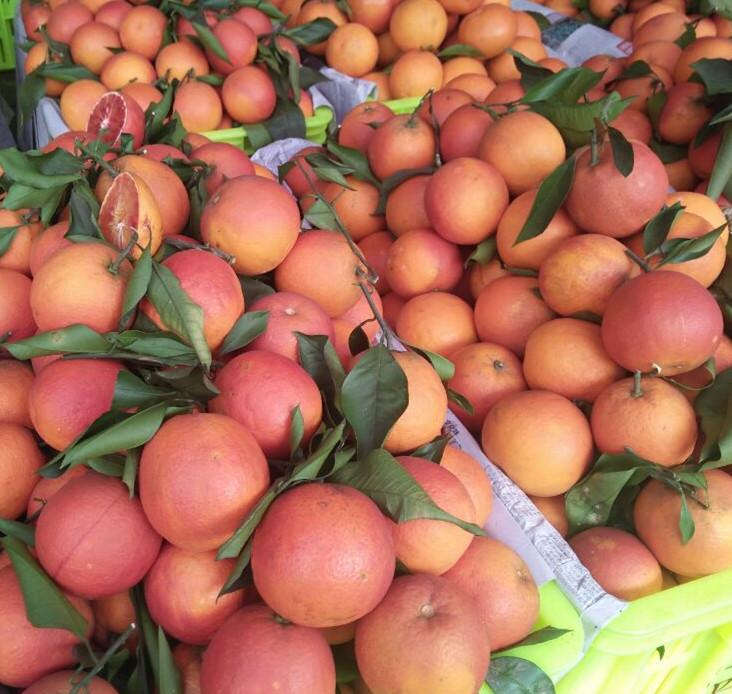 订购四川血橙、预定塔罗科血橙、订购血橙礼品-www.scxuecheng.com